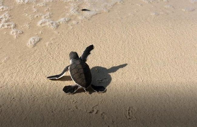 Sestry Kulichovy pomáhají želvám na Borneu, přidejte se i vy!