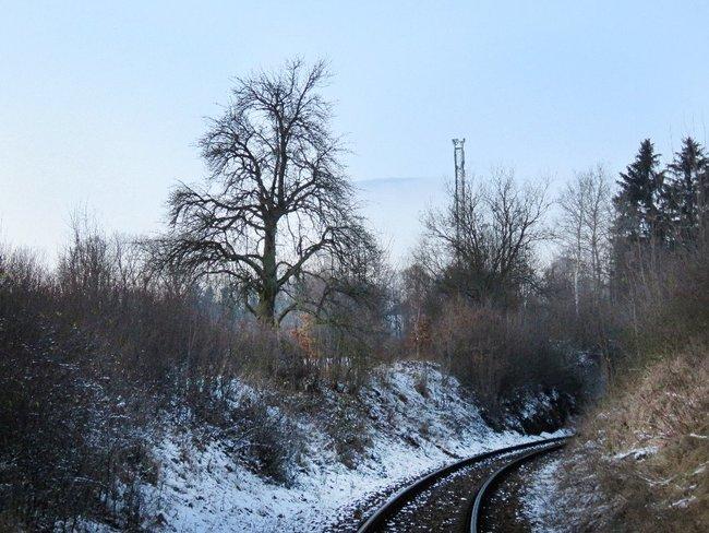 Rozsáhlé kácení kolem železnice v CHKO Broumovsko se podařilo alespoň zčásti omezit