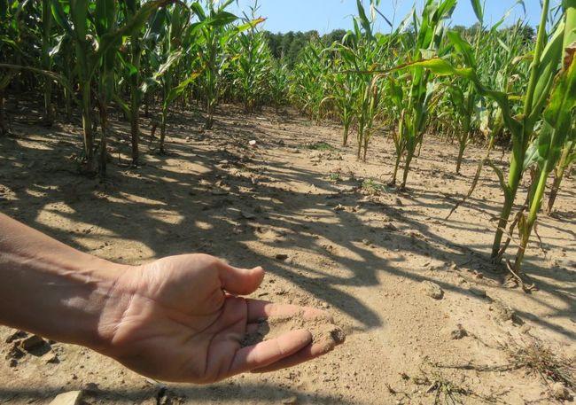 Do boje s klimatickými změnami se přidávají další obce na Broumovsku